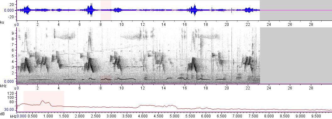 Sonogram of recording #AV 14969