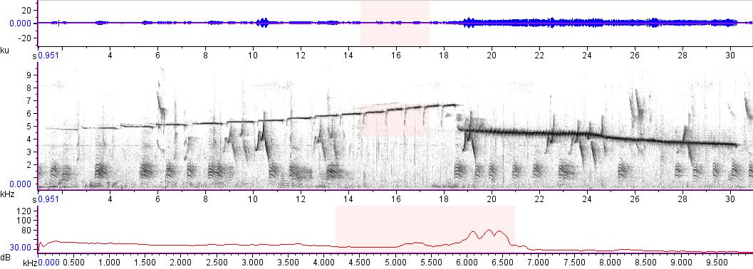Sonogram of recording #AV 14974