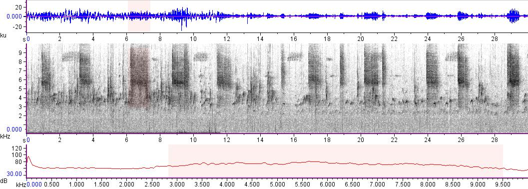 Sonogram of recording #AV 14978