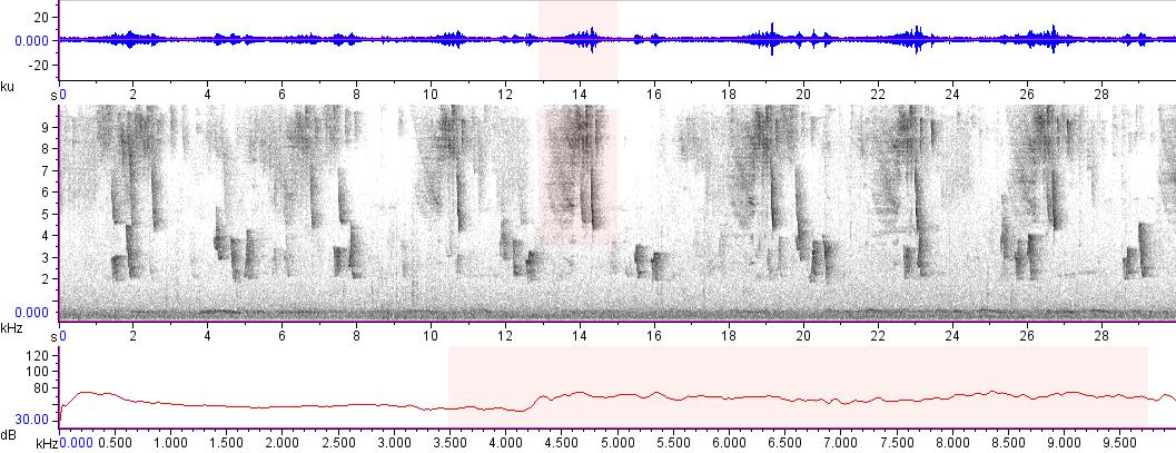 Sonogram of recording #AV 14982