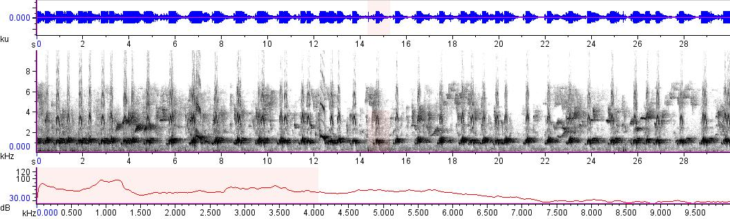 Sonogram of recording #AV 14991