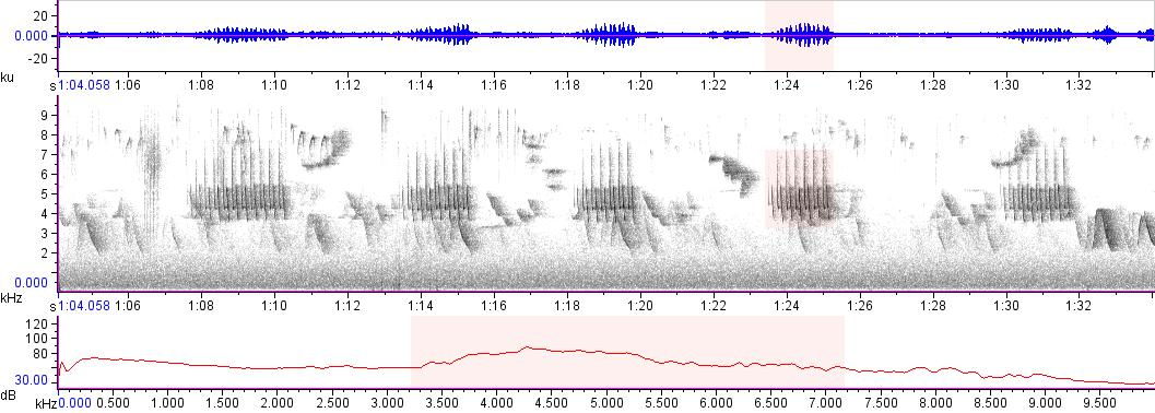 Sonogram of recording #AV 15016
