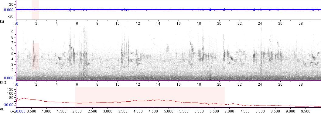Sonogram of recording #AV 15027
