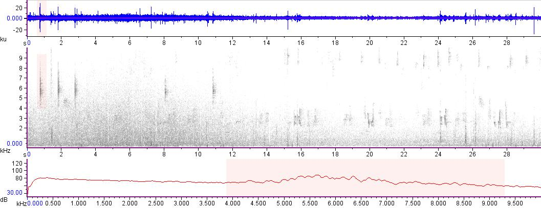 Sonogram of recording #AV 15071