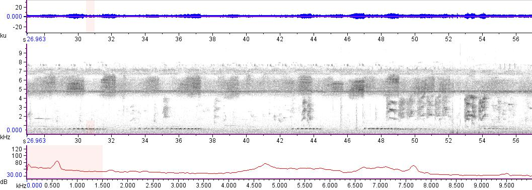 Sonogram of recording #AV 15085