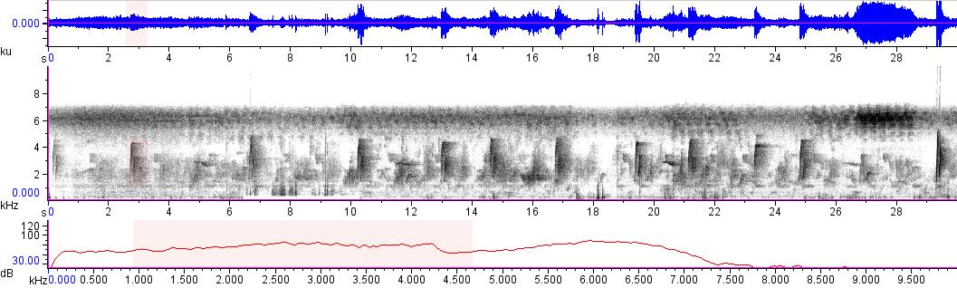 Sonogram of recording #AV 15093