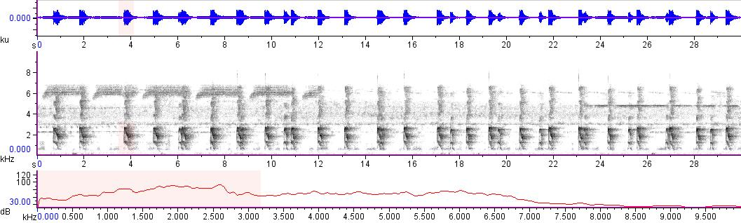 Sonogram of recording #AV 15095