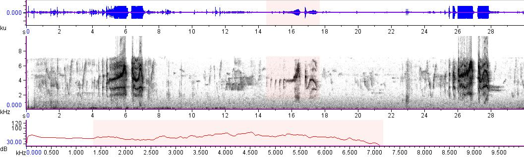 Sonogram of recording #AV 15135