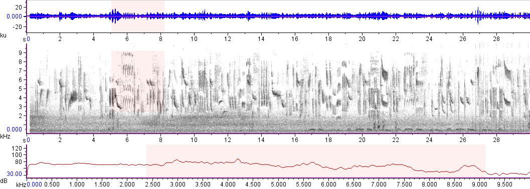 Sonogram of recording #AV 15149
