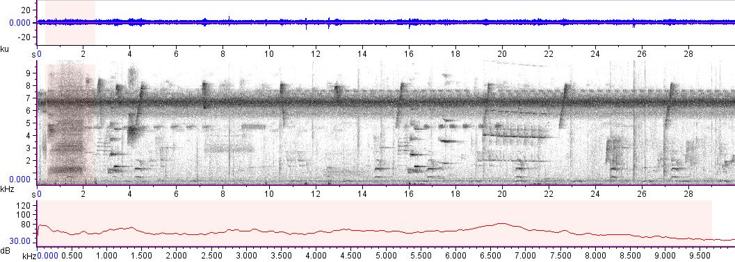 Sonogram of recording #AV 15158