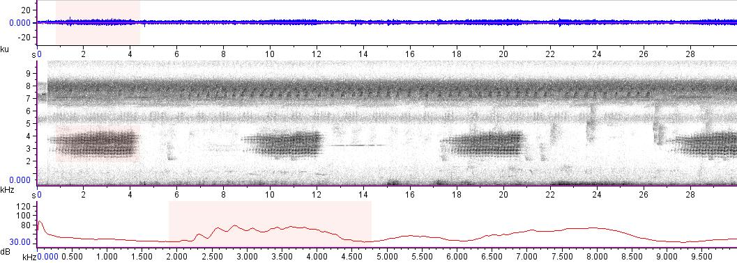 Sonogram of recording #AV 15168