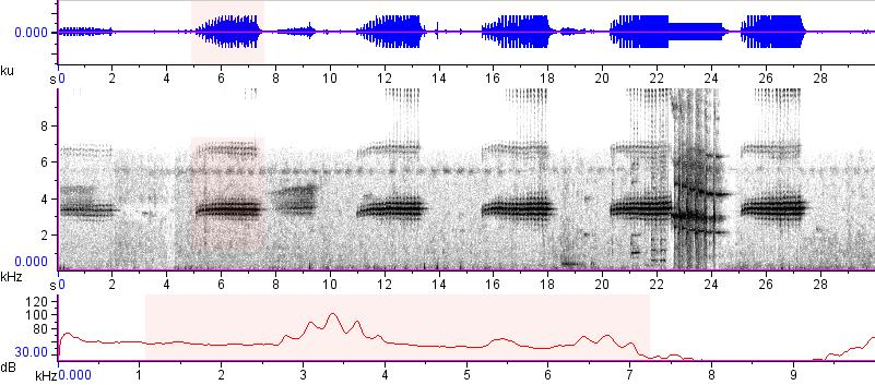 Sonogram of recording #AV 15169