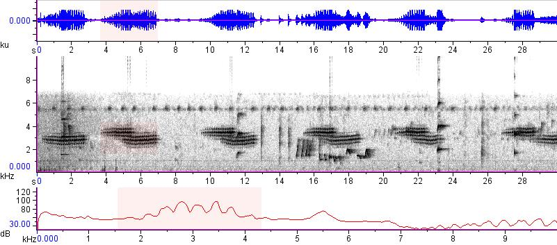 Sonogram of recording #AV 15170