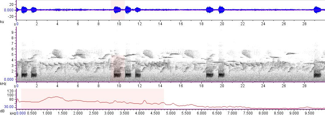 Sonogram of recording #AV 15175