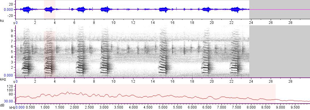 Sonogram of recording #AV 15185