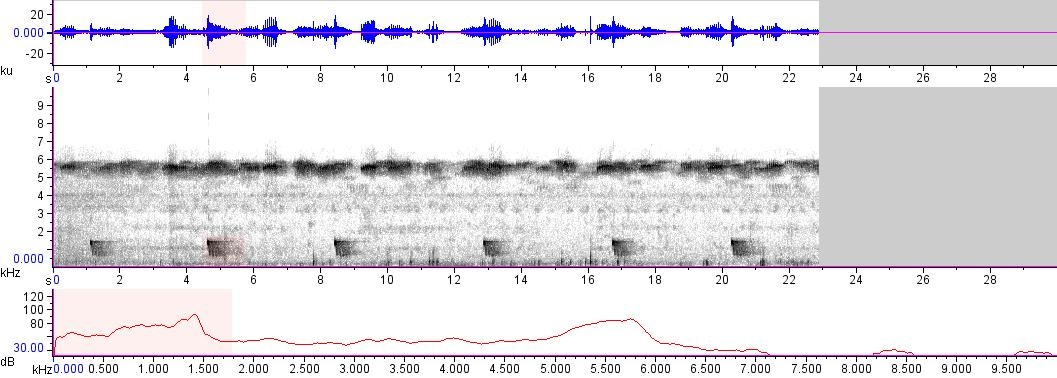 Sonogram of recording #AV 15190