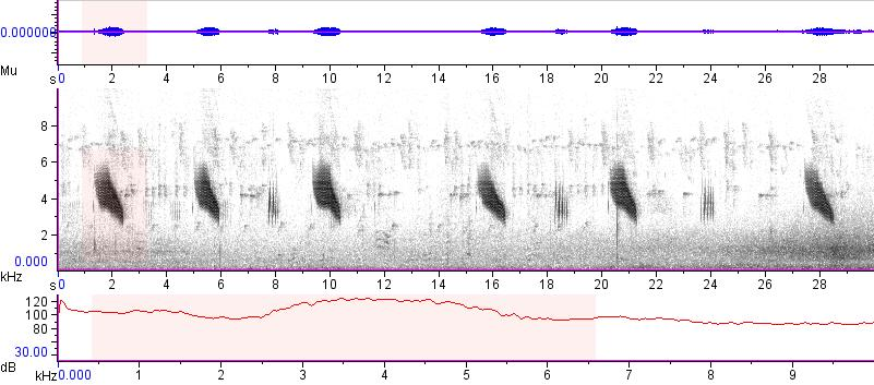 Sonogram of recording #AV 15194