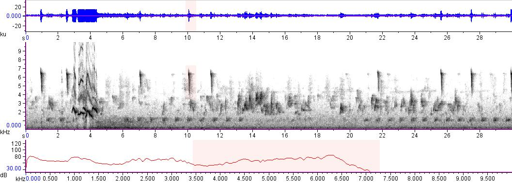 Sonogram of recording #AV 15206