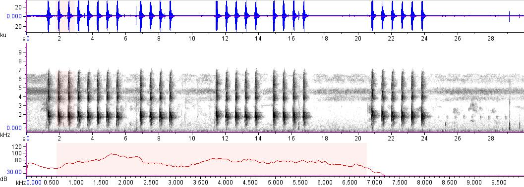 Sonogram of recording #AV 15237