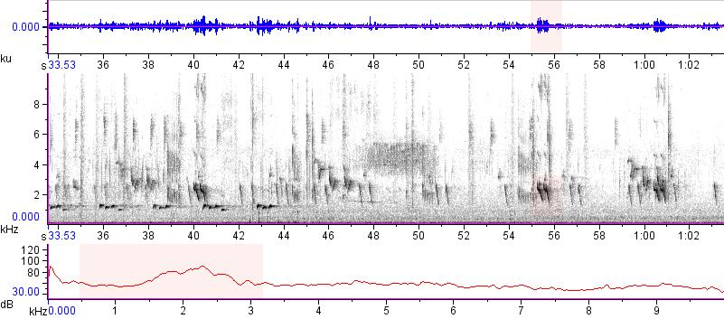 Sonogram of recording #AV 15275