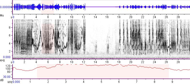Sonogram of recording #AV 15296