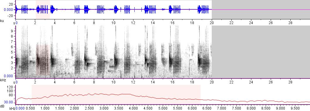 Sonogram of recording #AV 15298