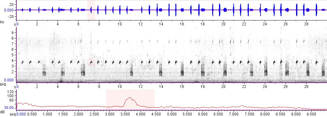 Sonogram of recording #AV 15312