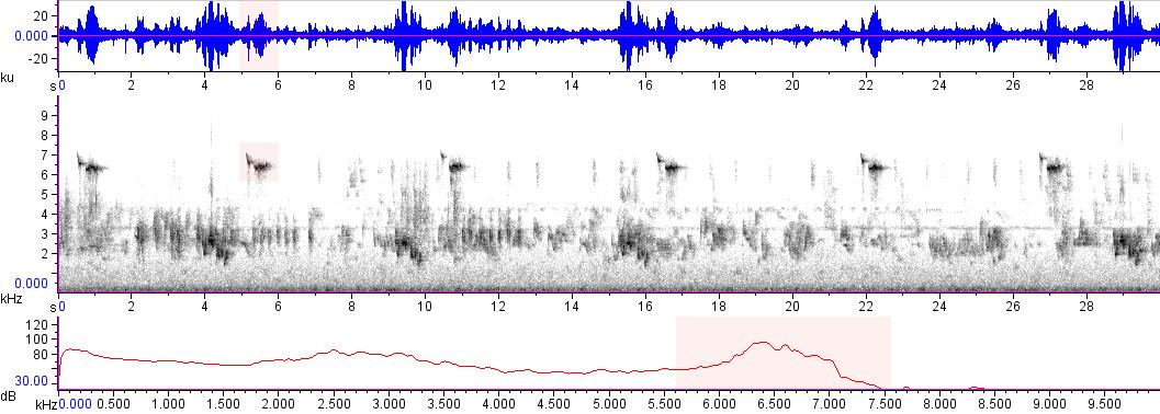 Sonogram of recording #AV 15342
