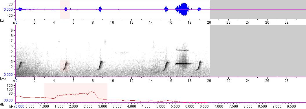 Sonogram of recording #AV 15361