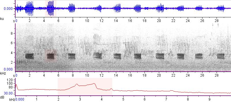 Sonogram of recording #AV 15404