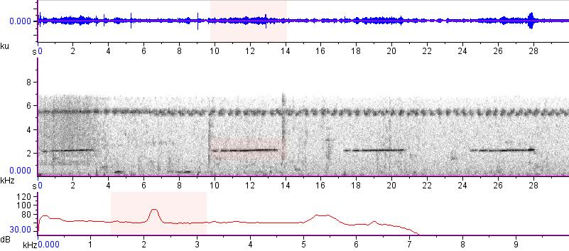 Sonogram of recording #AV 15412