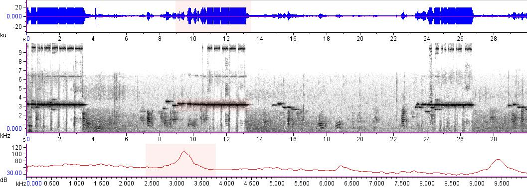 Sonogram of recording #AV 15413
