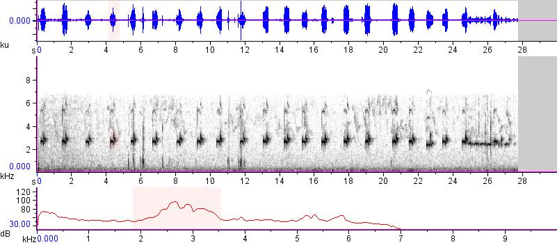 Sonogram of recording #AV 15419