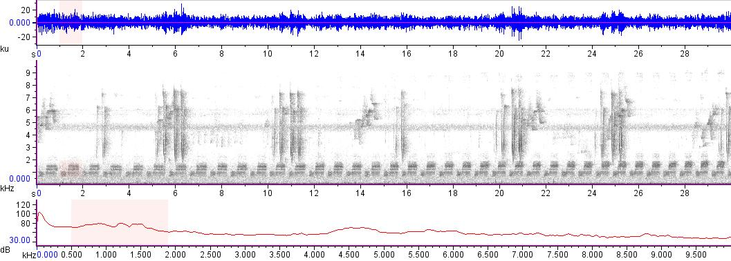 Sonogram of recording #AV 15422
