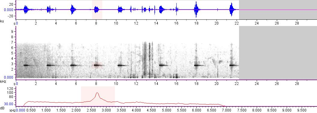 Sonogram of recording #AV 15431
