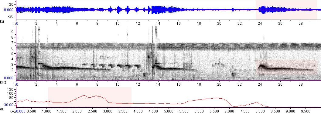 Sonogram of recording #AV 15443