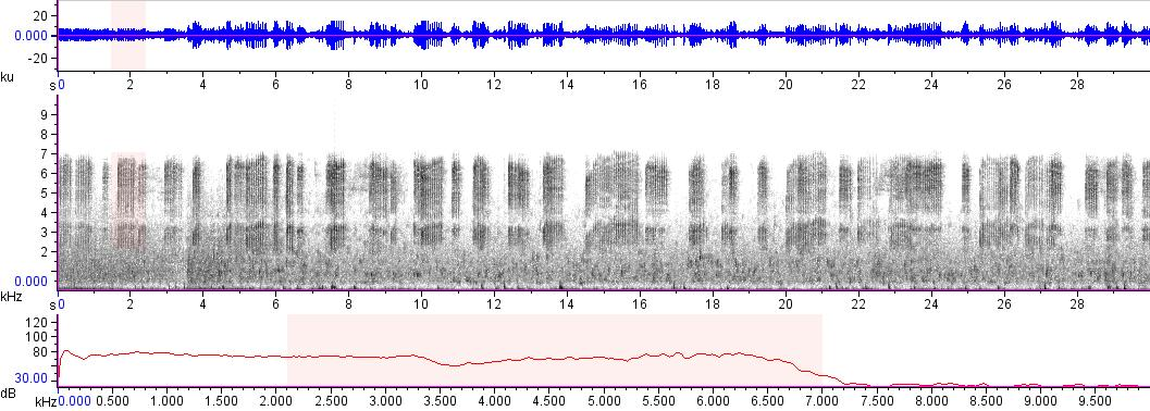 Sonogram of recording #AV 15450