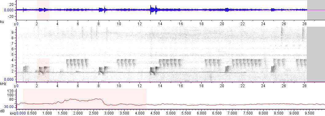 Sonogram of recording #AV 15462