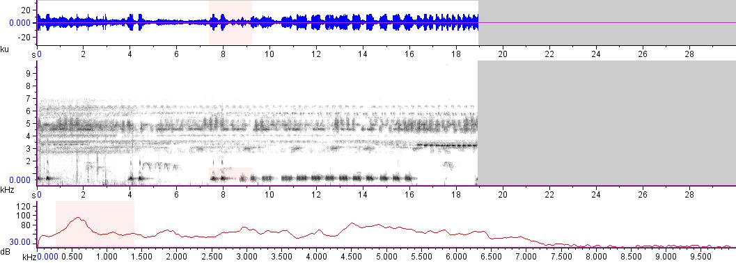 Sonogram of recording #AV 15477