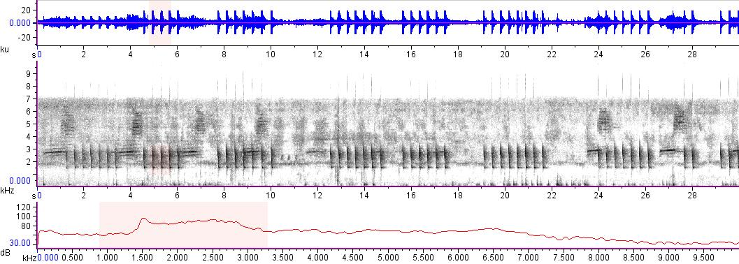 Sonogram of recording #AV 15512