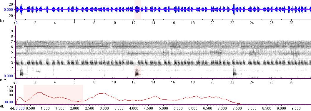 Sonogram of recording #AV 15520