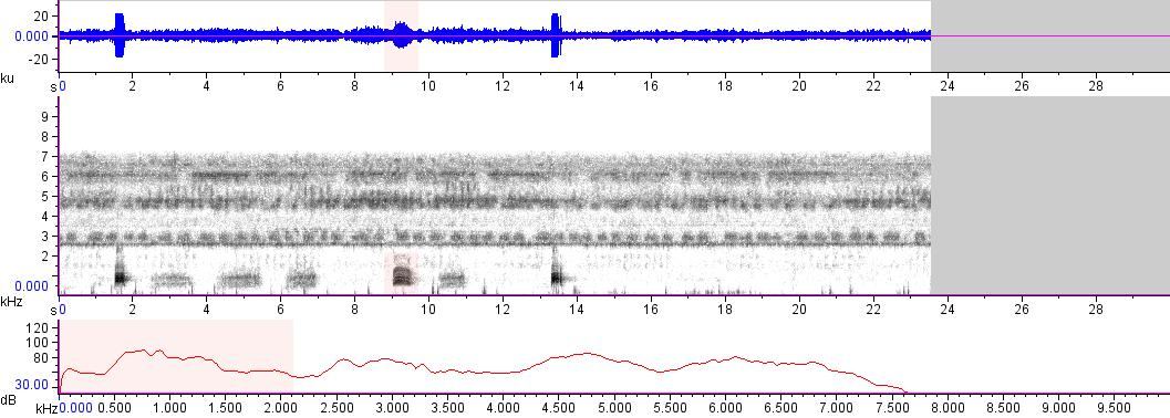 Sonogram of recording #AV 15521