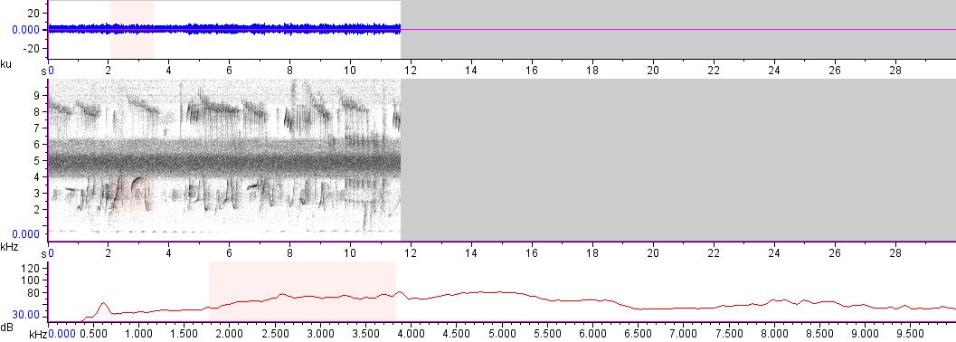 Sonogram of recording #AV 15551