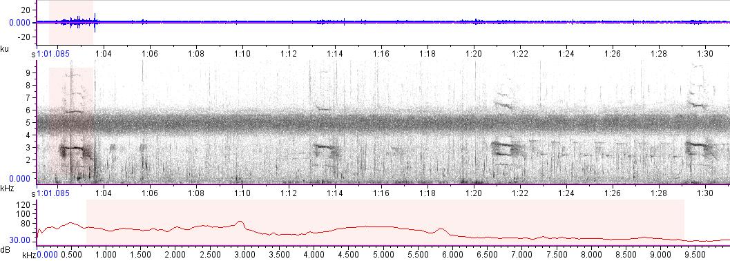 Sonogram of recording #AV 15552