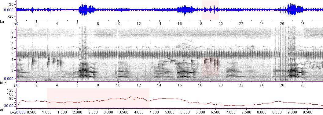 Sonogram of recording #AV 15559