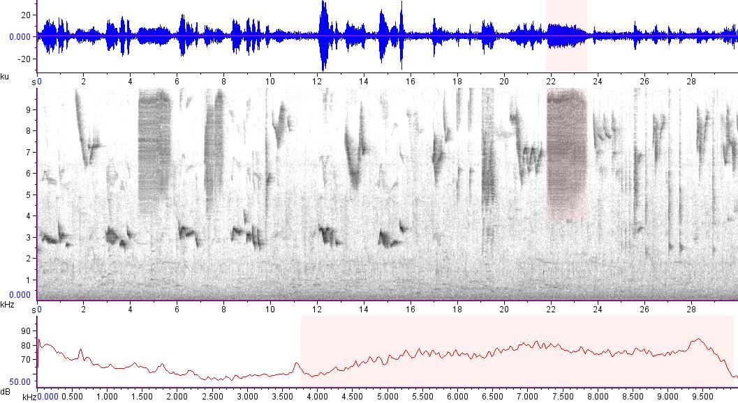 Sonogram of recording #AV 15573