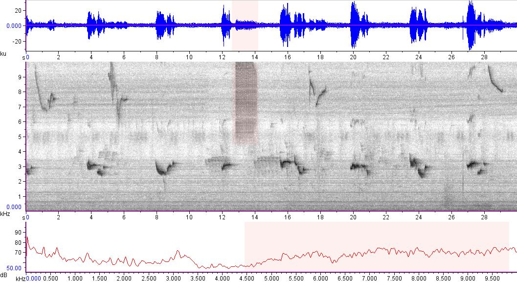Sonogram of recording #AV 15584