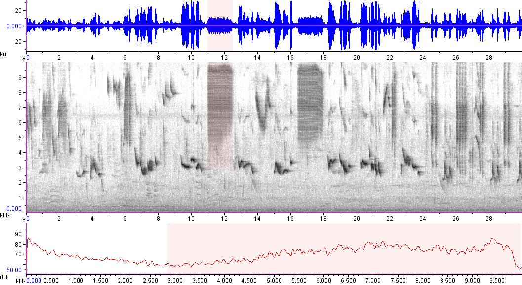Sonogram of recording #AV 15586