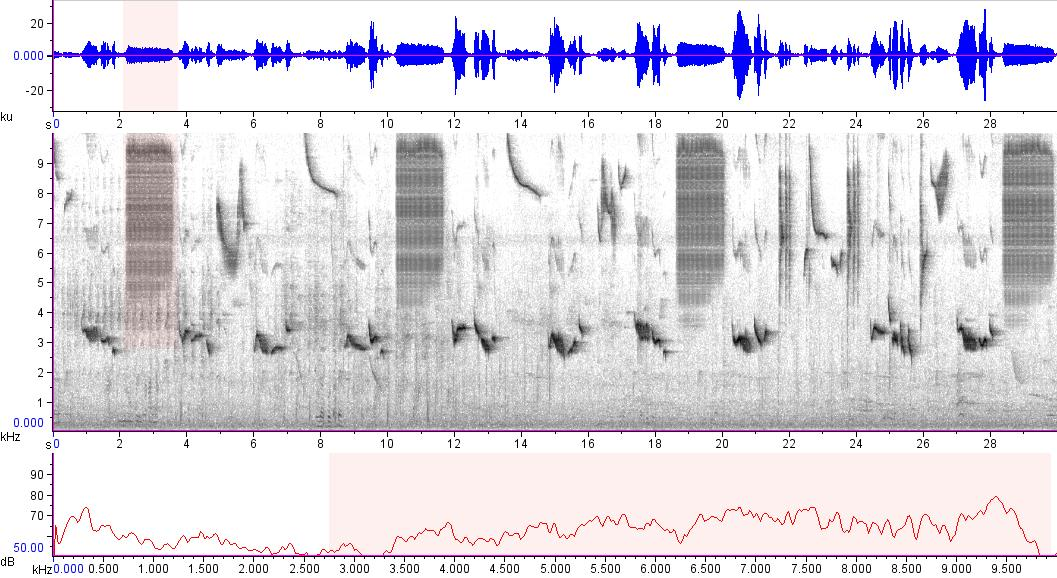 Sonogram of recording #AV 15590