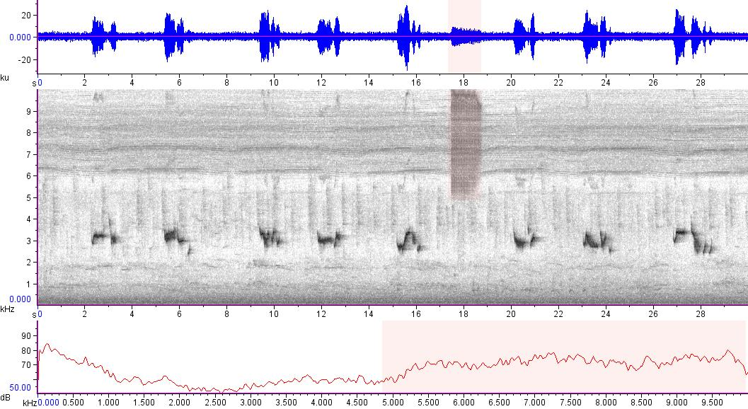 Sonogram of recording #AV 15593